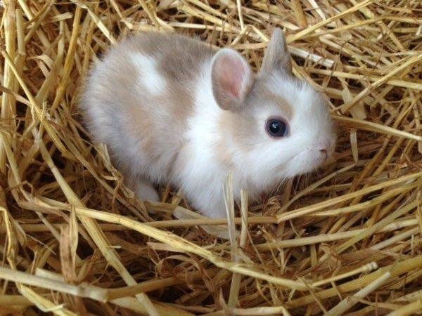 Kaninchen Kaufen Munchen Zwergkaninchen Kaufen Munchen Zwergkaninchen Zuchter Munchen Kaninchen Kaninchen Kaufen Zwergkaninchen