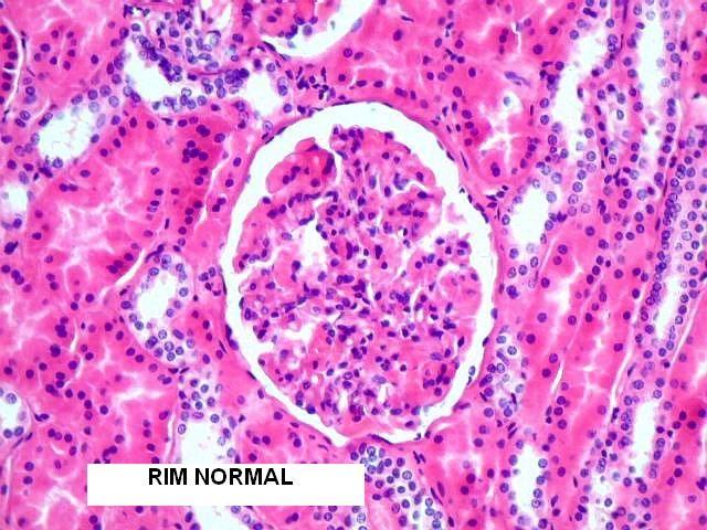 células reais microscopio optico - Pesquisa Google