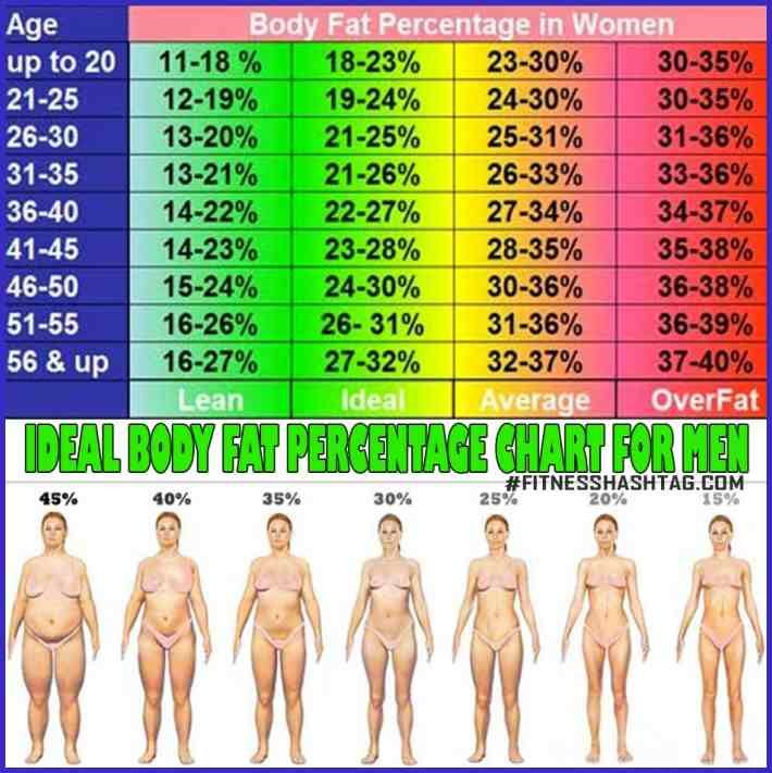 Body fat chart female weight pinterest fat