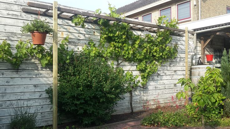 25 beste idee n over oude houten ladders op pinterest - Voorbeeld van houten pergola ...