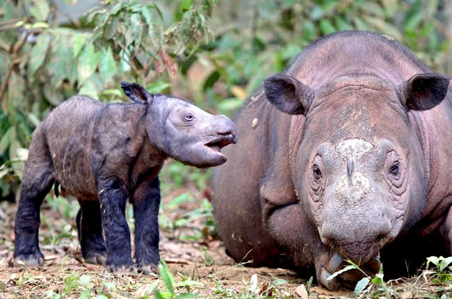 World Rhino Day Sept 22nd, 2013 to Urge Better Protection of Species