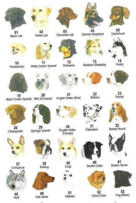 Dog breed head shots animals i like pinterest for Different types of puppies breeds