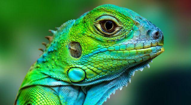reptile eye close up - Google Search