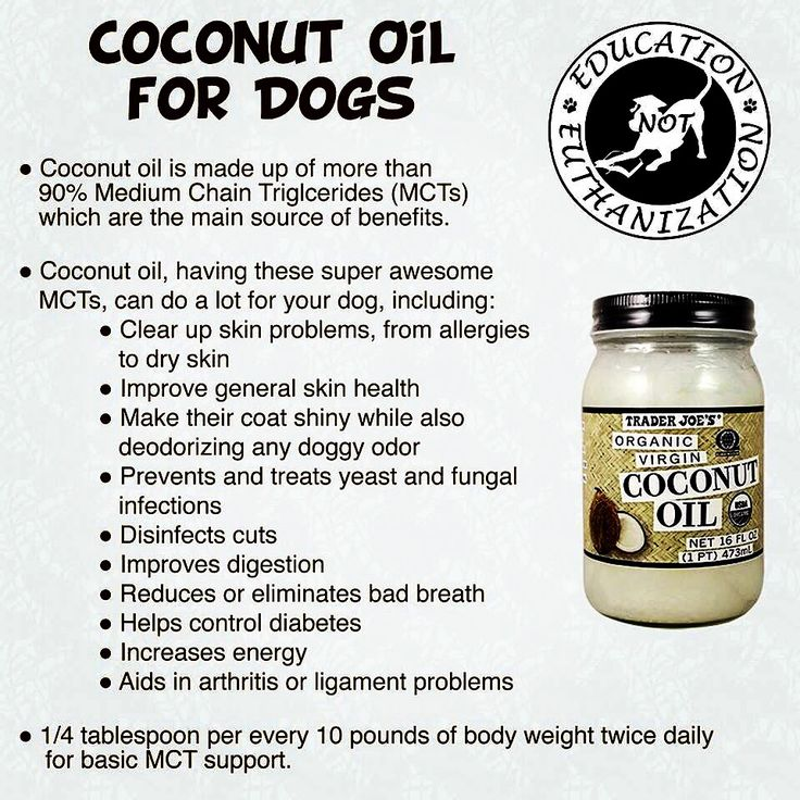 DOG OWNERS: COCONUT OIL FOR BREATH, ARTHRITIS, ENERGY, and SKIN