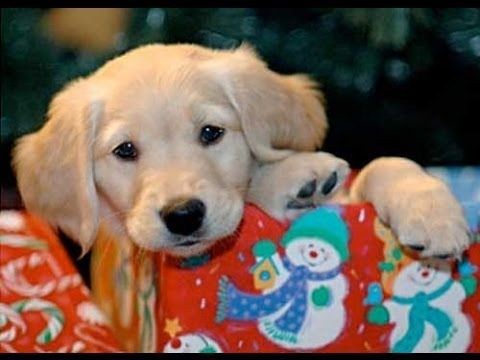 Christmas Puppy Surprise Compilation 2013