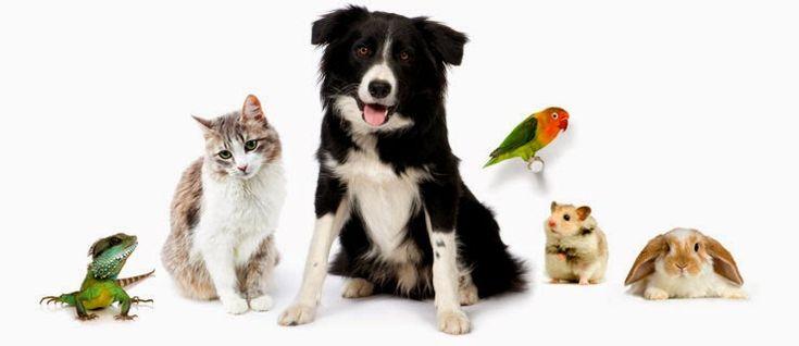 cuidados com animais de estimação  dicas animais de estimação  cuidados com os animais em geral  como cuidar de um animal de estimação  curiosidades pet  cuidados com animais silvestres  cuidados com seu pet no verão  cuidados pet