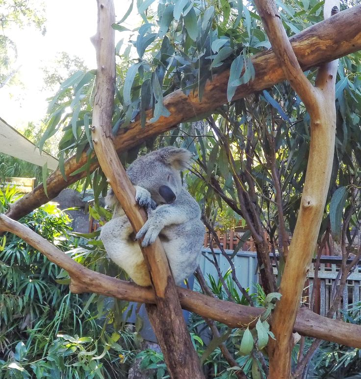 Your little koalas will love nap time on #HamiltonIsland. Sleeping children = happy parents!