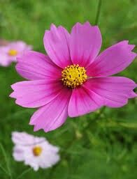 En primavera, podemos pedir a los niños que recolecten flores, que las traigan al aula, y que nos cuenten dónde la han econtrado, con quién estaban...