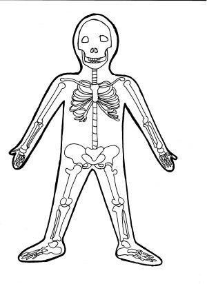 http://pomocucitelum.cz/katalog-ucebnich-materialu/biologie/lidske-telo/lidska-kostra-pro-male-deti-659.html
