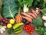 vegetarian diet essay