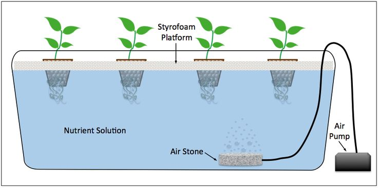 Diagram of a Deep Water Culture (DWC) hydroponic system