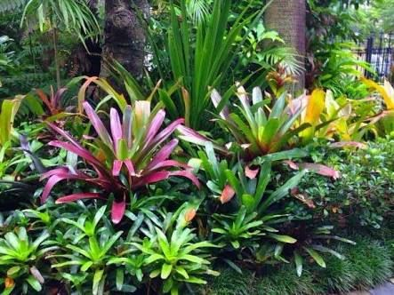 the 83 best images about tropical on pinterest gardens