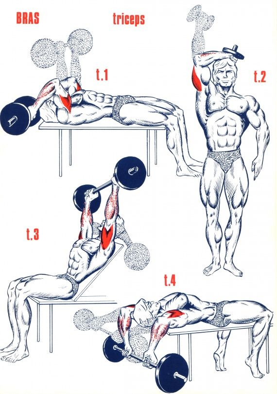 Triceps                                                       …