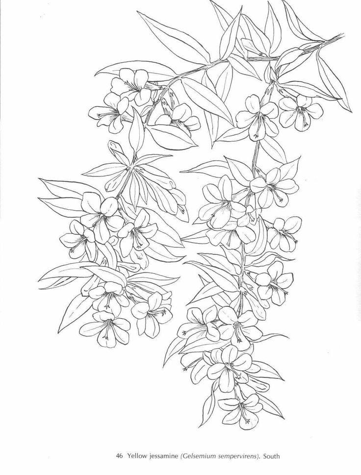 Yellow Jasmine Jasmine flower tattoos, Adult coloring