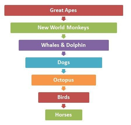 Animal Intelligence Hierarchy