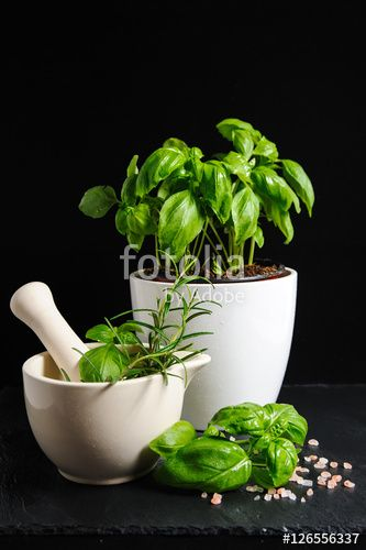 Healthy herbs in white ceramic mortar, a potted basil and Himalayan salt isolated on black