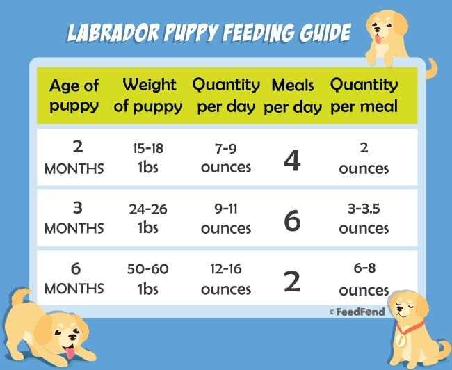 20 Best Puppy Foods For Labs In 2020 Best Puppy Food Nutrition