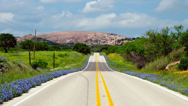 The Quiet Revolution Turning Roadsides Into Nature Reserves
