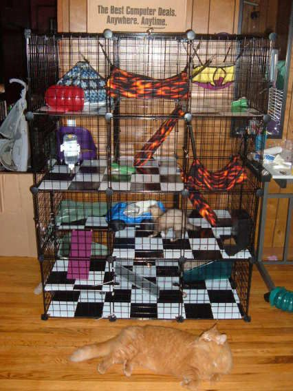 Diy ferret cage! Wow! What an awesome idea!! I need to do this! It will save so much space :)