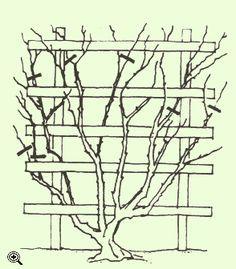 die besten 17 ideen zu kletterrosen auf pinterest rosen blumengarten und bauerng rten. Black Bedroom Furniture Sets. Home Design Ideas