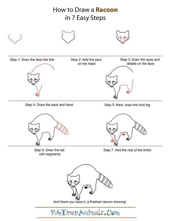 step by step how to draw a cartoon kangaroo