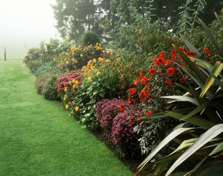 The best plants for a burst of colour in your garden this autumn and winter - housebeautiful.co.uk
