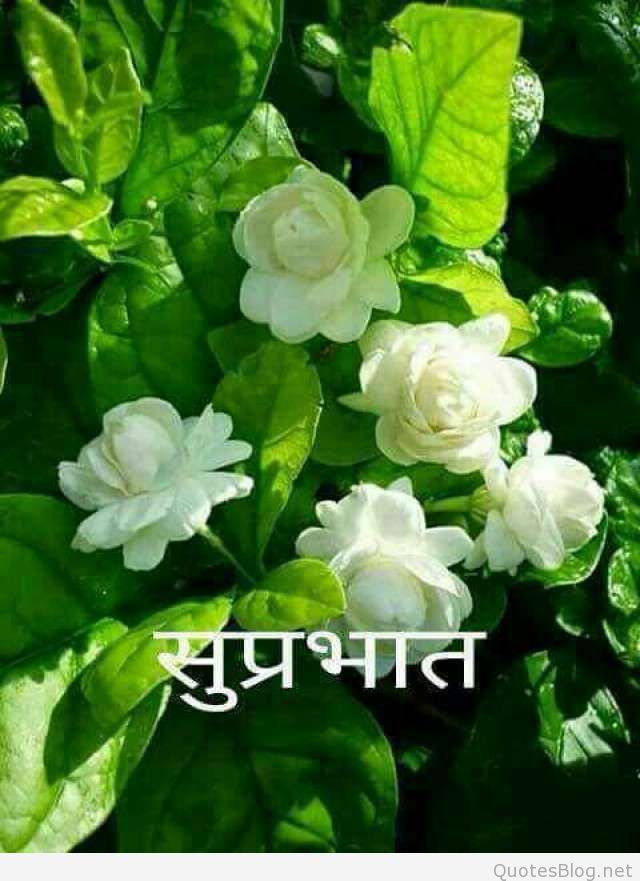 26 Suprabhat Images In Hindi Flower Fragrance Jasmine Plant Jasmine Flower