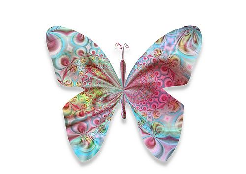 butterfly32303   Flickr - Photo Sharing!