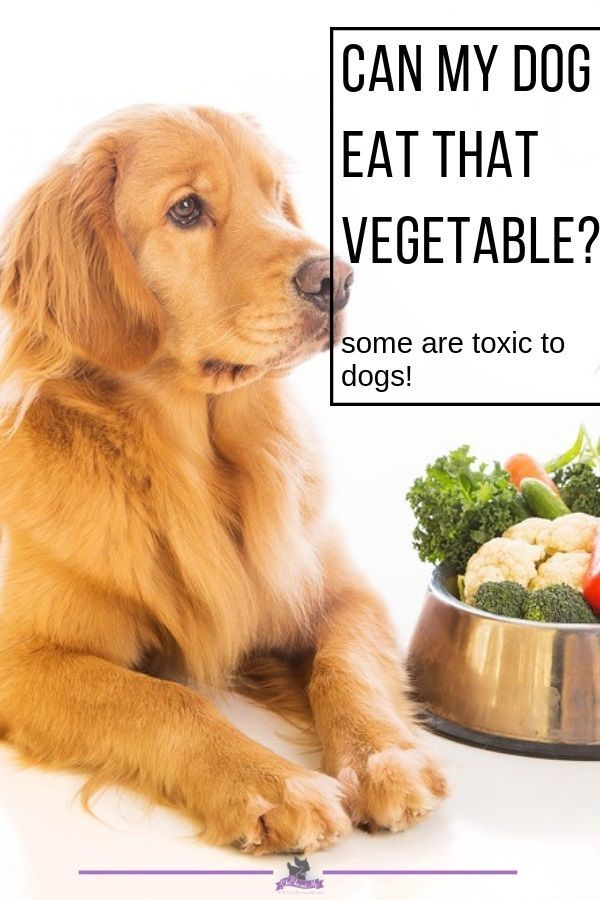 Title Vegetables Can Be Healthy But Not All Dog Nutrition