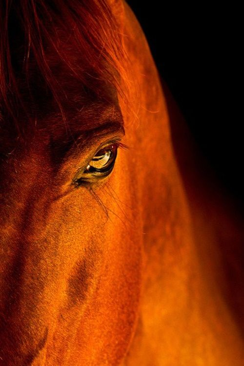 There is something about the outside of a horse that is good for the inside of a person! : )