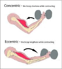 Opposing muscles - concentric and eccentric contraction