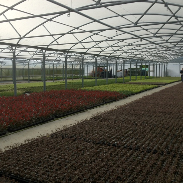 Potting young shrub plants to liners at FitzGerald Nurseries