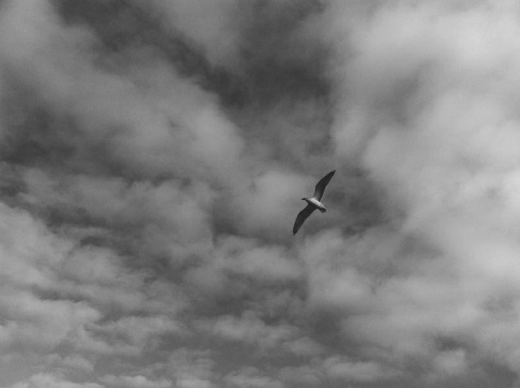 . recent wanderings . . recent wanderings . Photography, black and white photography, beach photography, beach textures,, vsco, lightroom, iphone photography
