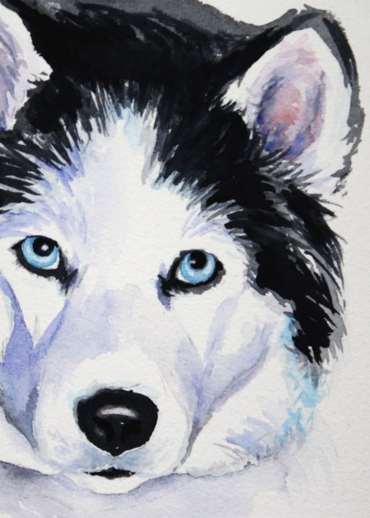 Картинки хаски с голубыми глазами срисовки