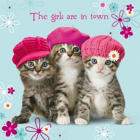 Kartka urodzinowa Kitten In Town