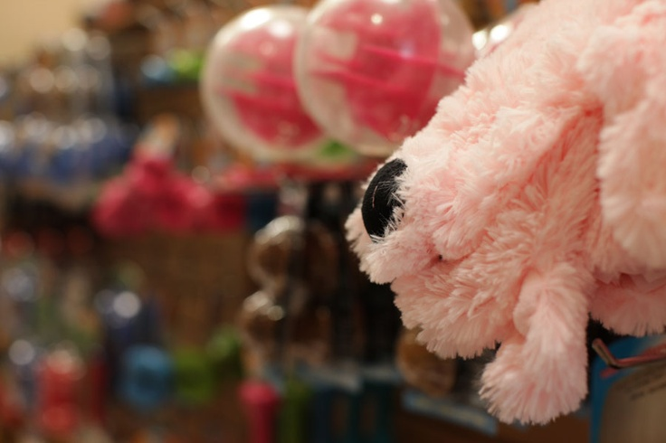Visit our great toy selections to spoil your pup.