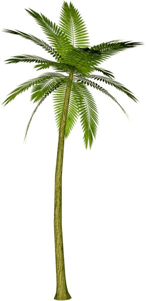 Palm Tree PNG Clipart Picture