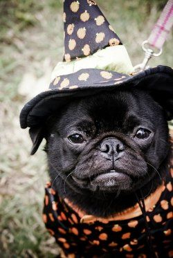 Spooky-lite Halloween fun with dogs  Add some joy and put a little fun in your…