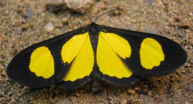 Verdadeiras-criaturas-de-o-caso-da-borboleta-atiria/