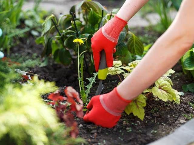 Každoroční boj s plevelem je náročný a únavný. Taky jste letos odhodlaní k tomu, že s ním nebudete mít slitování?