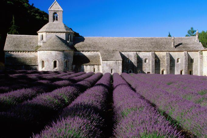 Lavender field at Abbey of Senanque, near Avignon, France