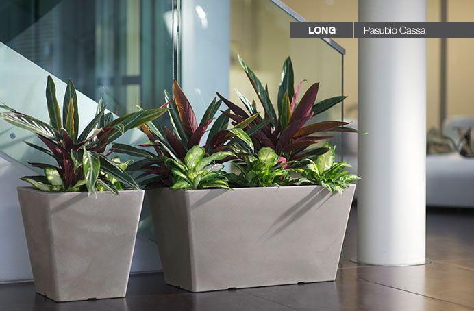 Schlichte Blumenkübel sind ein guter Hintergrund für üppige Pflanzen.