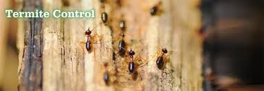 Remove termites and bed bugs from your home as well with effective and high performance termite control and bed bugs control of Mourier pest control.