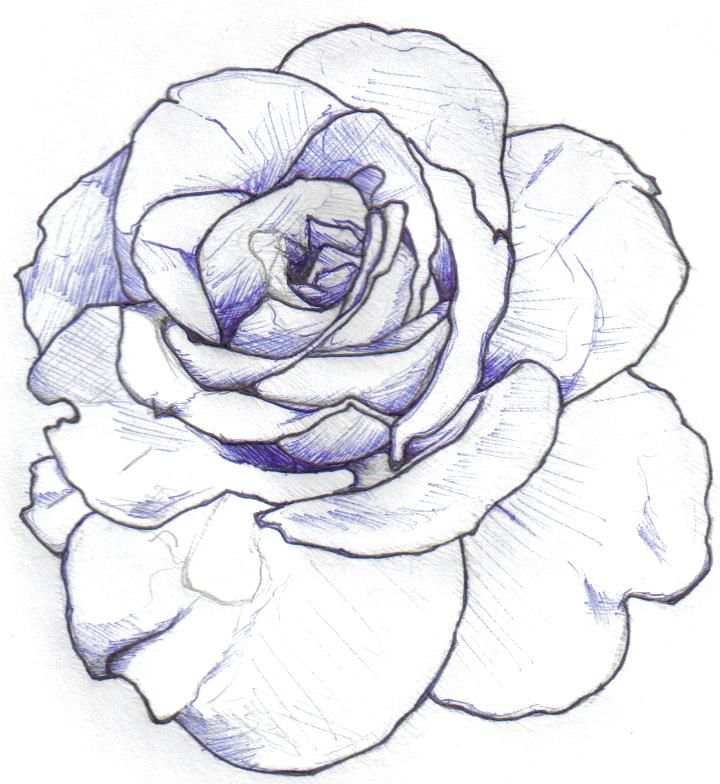 Simple Rose Tattoo Outline: Rose Outline: Minimal Shading