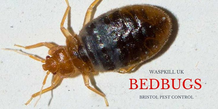Bristol Bed Bug Control Services That Solve - #bedbugs #blood. For a better nights sleep that's bite free and bed bug free, book your bed bug control treatment today. @waspkilluk