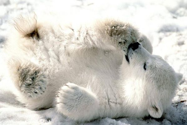 Pets | Ζώα: 10 χαριτωμένα «πιτσιρίκια»