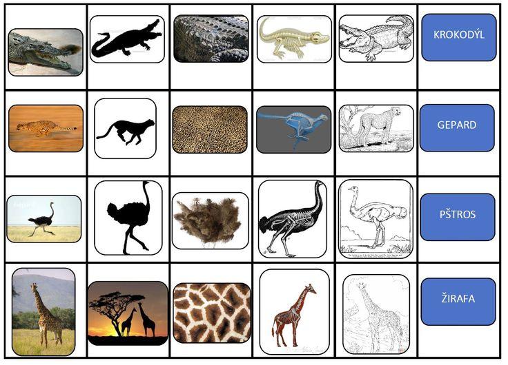 Přiřazování obrázků ke zvířeti - fotka, obrys, kostra, srst, kresba.