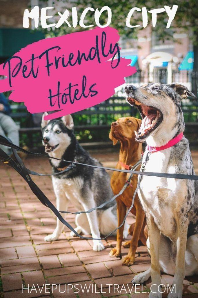 Pet Friendly Hotels Mexico City Condesa Roma And Centro Historico Pet Friendly Hotels City Pets Dog Friendly Accommodation