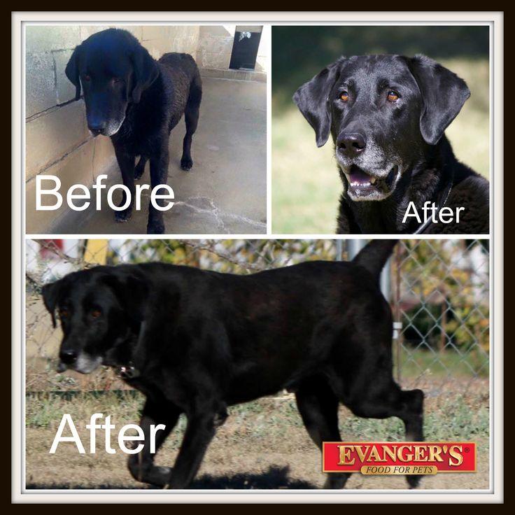Raw Dog Food Transformation