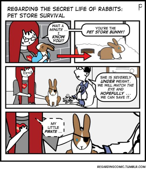 As you probably guessed …The next few weeks will chronicle an all-too-familiar story regarding pet store rabbits. (To buy, or not to buy … that is the question). This is PET STORE POLITICS or WASH, RINSE, REPEAT.